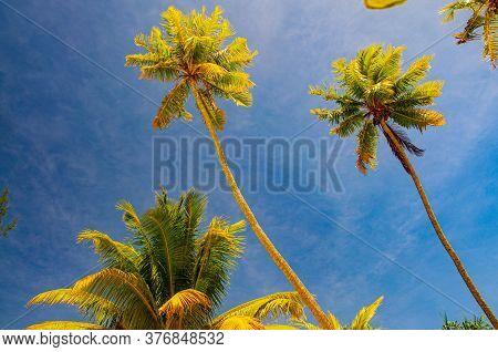Palm Trees Deep Blue Sky French Polynesia