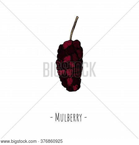 Mulberry. Vector Cartoon Illustration. Isolated Object On White.