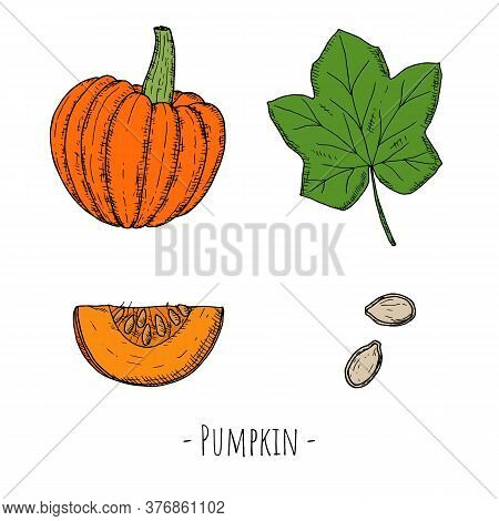Set Of Whole Pumpkin, Pumpkin Leaf, Seeds And Pumpkin Slice.