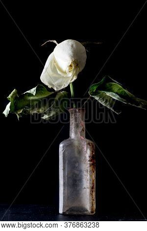 Withered And Faded Rose In An Old Dirty Vintage Bottle On Black Background