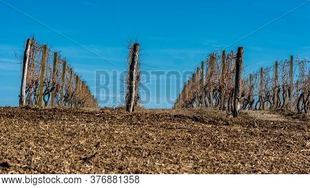 Vineyard In Fruska Gora Mountain In Serbia. Fruska Gora Is Famous For Many High Quality Vineyards An