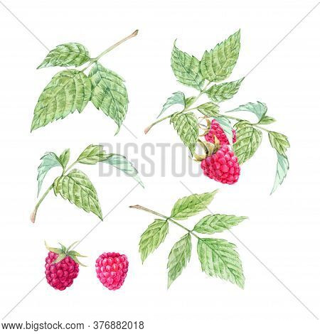 Beautiful Set With Watercolor Raspberry And Leaves Painting. Stock Illustration.
