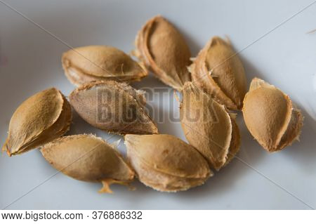 An Apricot Kernel Is The Seed Of An Apricot, Which Is Located Within The Hard Endocarp . Apricot Ker