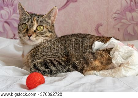 Beautiful Cat With Big Green Eyes In A Disposable Diaper Lies On A White Sheet On The Bed With Her R