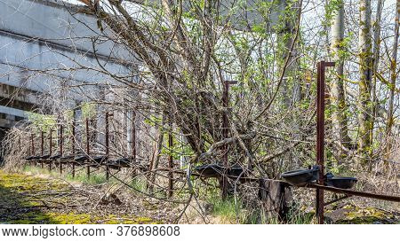 Remains Of An Abandoned Farm Stable Overgrown With Bushes And Trees In Chernobyl Disaster Area In Be