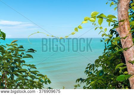 Koh Proet Island,the Trees And Green Leaves With The Backdrop Of The Emerald Green Sea And The Brigh