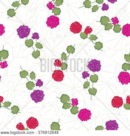 Vector Geranium Flowers In Pink Red Purple With Green Leaves On Stems On White Background Seamless R