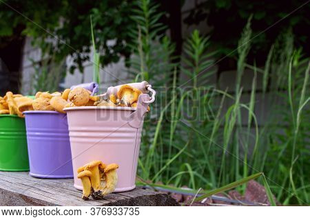 Metal Buckets Of Fresh Chanterelle Mushrooms Outside, Green Grass On Background