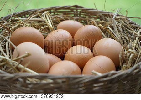 Close-up Natural Brown Chicken Eggs On A Bed Of Straw With Feather. Eggs On The Roost Close Up With