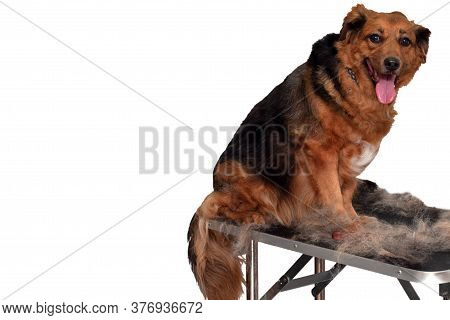 Dog On A Grooming Table Getting A Hair Cut