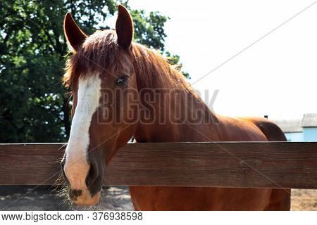 Standing Brown Horse With Mane On A Farm