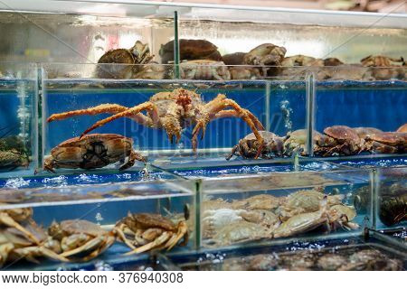 Different Crabs In Tanks. Fresh Meaty And Tasty Seafood