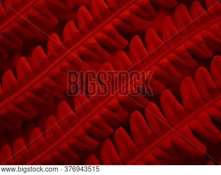 Fern Foliage. Deep Red Tinted Plant Tracery. Stalks And Leaves. Natural Horizontal Backdrop Or Wallp