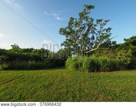Tree And Bright Green Vegetation At Trailhead At Eco Pond In Everglades National Park, Florida In Su