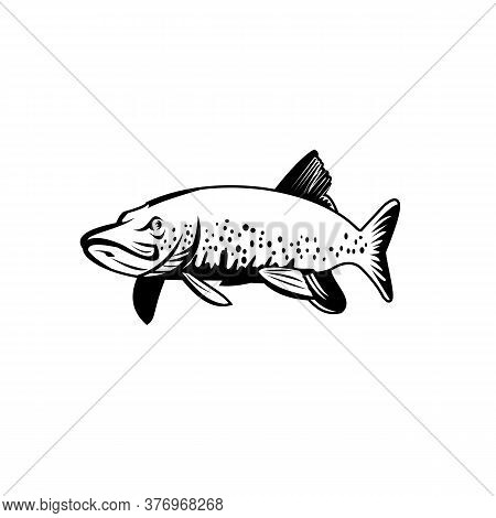 Retro Style Illustration Of A Northern Pike, Lakes Pike, Great Northern Pike Or Jackfish, A Species