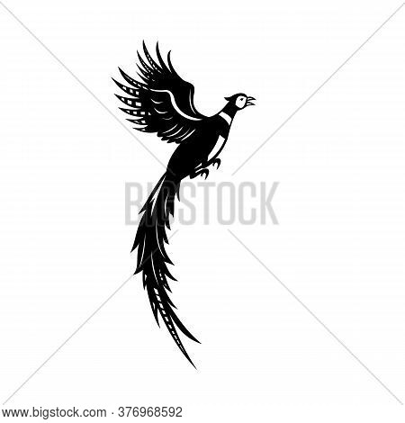 Black And White Illustration Of A Silhouette Of A Common Pheasant Or Ring-necked Pheasant Flying Up