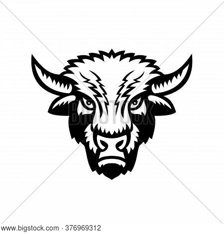 Mascot Icon Illustration Of An American Bison Or American Buffalo Viewed From Front On Isolated Back