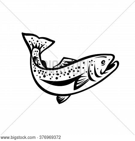 Retro Style Illustration Of Rainbow Trout (oncorhynchus Mykiss), A Species Of Salmonid Native To Col