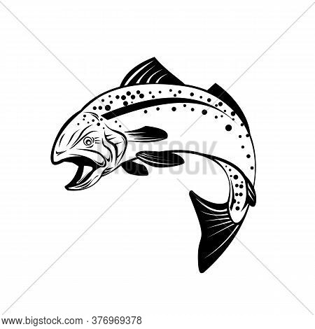 Retro Style Illustration Of Speckled Trout, Spotted Seatrout, Or Cynoscion Nebulosus, A Common Estua