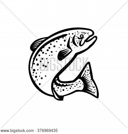 Illustration Of A Rainbow Trout Fish Jumping Up On Isolated White Background  Done In Retro Black An