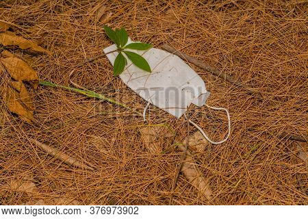 Discarded White Medical Face Mask Laying On Dry Pine Needles.