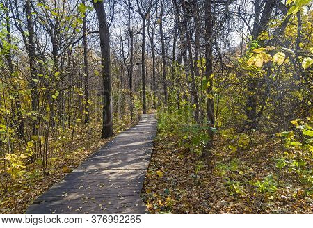 Boardwalk In A Forest Park. Nature Reserve On The Sparrow Hills, Moscow, Russia. Sunny Day In Octobe
