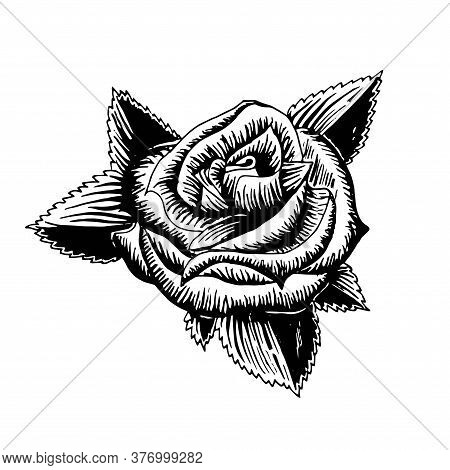 Rose. Original Monochrome Ink Hand Drawn Flower Art Design Element Object Isolated Stock Vector Illu