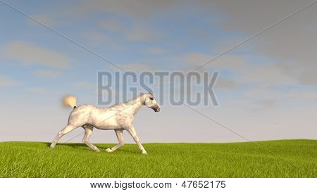 white horse in field