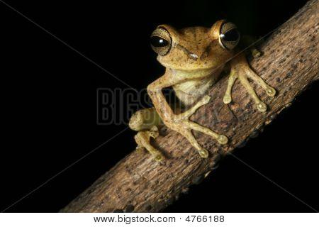 Frogbolivia