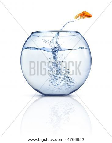 A goldfish jumping out of the water to escape to freedom. White background. poster