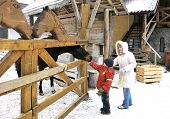 Mother and two sons feed a horse in winter poster