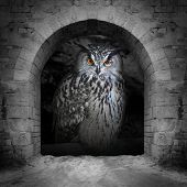 The evil eyes in the vault window. ( Eagle Owl, Bubo bubo). Halloween theme. poster