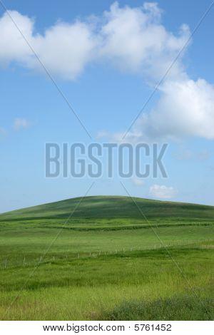 meadow hill portrait