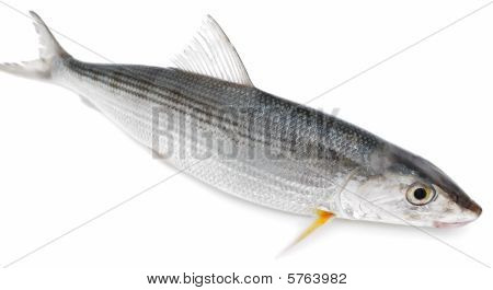 Fresh silver fish on a white background poster