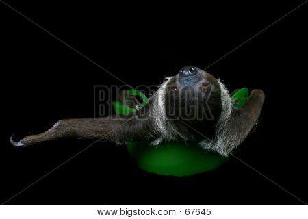 Just Sloth'n Around