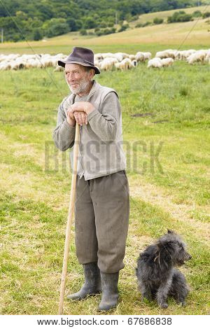 Old Sheperd Near His Flock