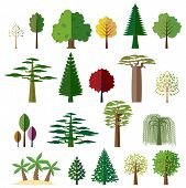Various types of deciduous and evergreen trees. Set of flat vector icons. poster