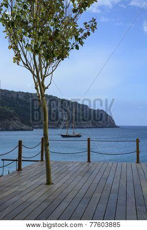 Wood Deck, Tree And Brig