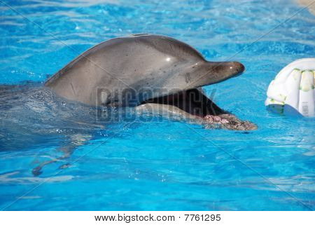 Happy Dolphin With Ball