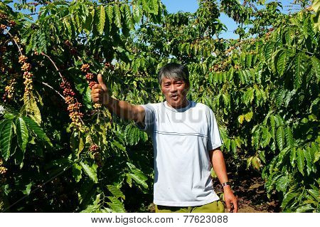 Asian farmer happy with productivity crop Vietnamese man stand at coffee bean plantation cafe is the plant that rich caffeine popular agriculture product at basalt soil highland in Vietnam poster
