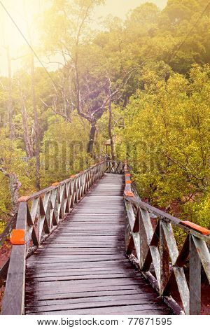 Wooden boardwalk in a tropical swampland heading into a forest of Sarawak in the morning light