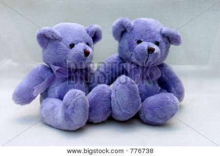 Violet bears