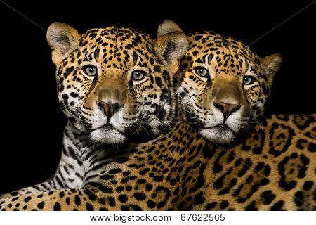 Jaguar Pair