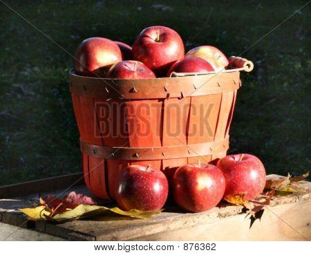 Apples31A