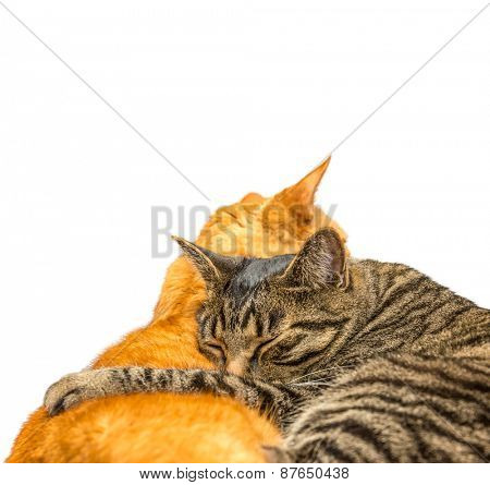 Two cats sleeping together. Isolated on white background.