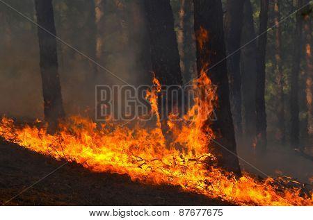 Near Kiev, Ukraine -April 11, 2015: Severe drought. Fires destroy forest and steppe. April 11, 2015 Near Kiev, Ukraine.