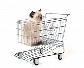 cute kitten sitting inside of shopping cart on white background poster