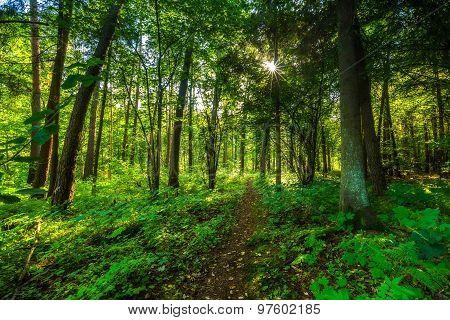 Beautiful Summer Wild Forest Landscape