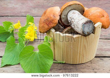 Mushrooms With Orange Caps (leccinum Aurantiacum) In A Wooden Bucket