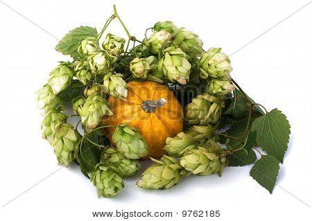 Green Malt Grape And Little Pumpkin